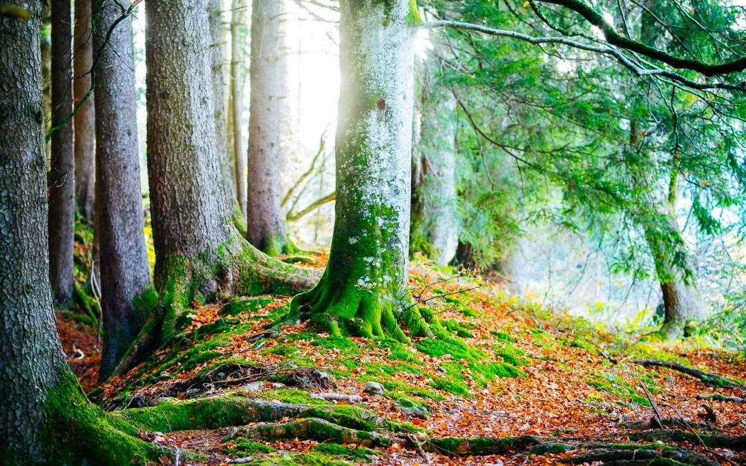 Herbststimmung in Westerhofen